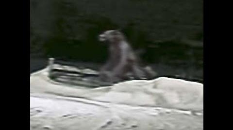 The Beast Of Bray Road Sighting Account October 31, 1999
