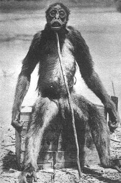 De Loys ape
