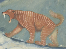 Mountain sabre-tooth Coudray