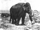 The Killing of the Mammoth