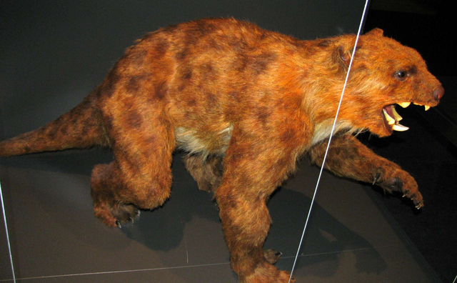 File:Thylacoleo physical reconstruction.png