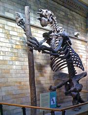 Megatherium at London