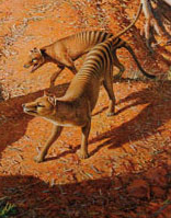 File:Thylacine thumb.png