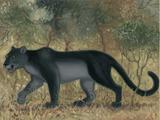 Ndalawo