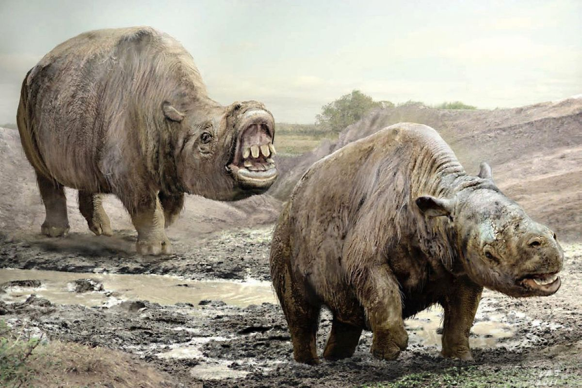 Image result for toxodon