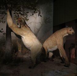 Anisodon grande models