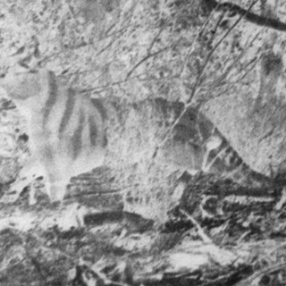 (2) Colour-inverted version of the Rilla Martin photograph, showing the animal's outline more clearly.