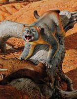 File:Thylacoleo thumb.png