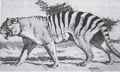 Marsupial lion accurate reconstruction.png