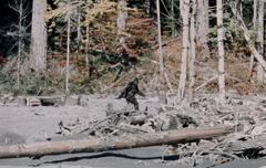 Patterson-Gimlin footage frame