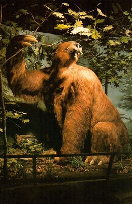 Megalonyx reconstruction large