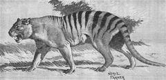Queensland Tiger, Neave Parker