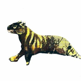 (3) Possible appearance of the Ozenkadnook tiger unobstructed by shrubbery.