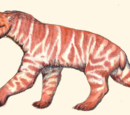 Ennedi Mountain Tiger