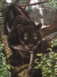 White-throated black jaguar, William Rebsamen