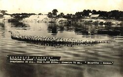 Sucuriju gigante 1948