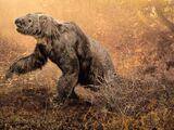 Living ground sloth