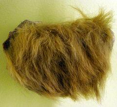 Mylodon fur