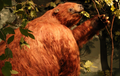 Iowa sloth cropped and flipped.png