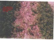 Nueva Tanca incident trail