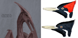Cuban pterosaur