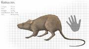 Giant rat-d4xmpo6