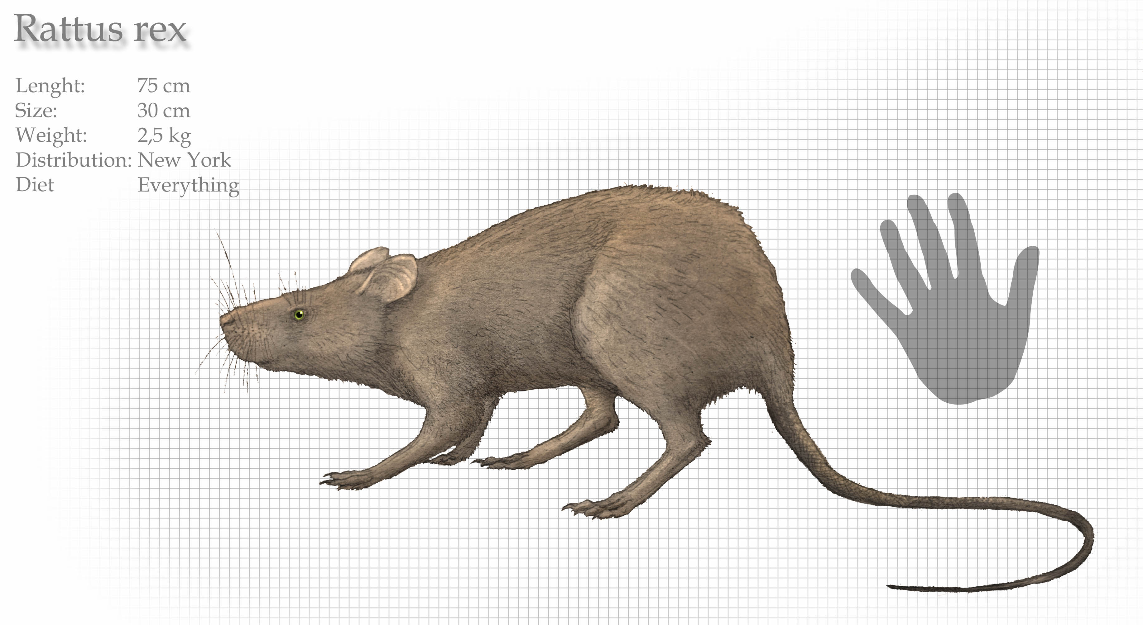 giant rat | cryptid wiki | fandom poweredwikia