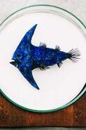 Arrowfish