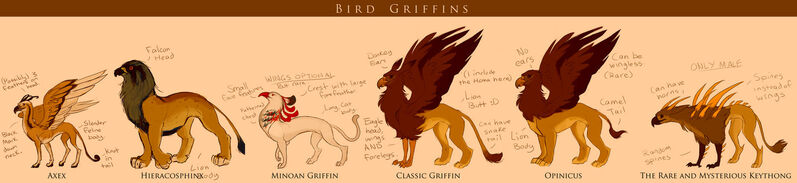 1 bird griffins of the world by ayem