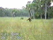 Bigfoot12large