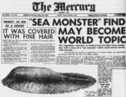 The Mercury Tasmanian Globster