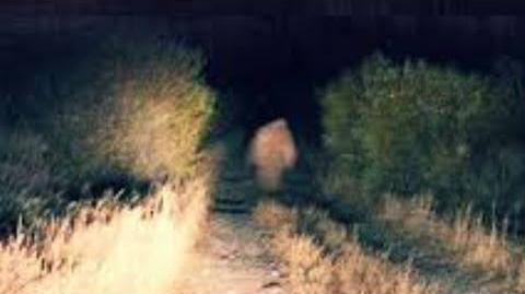 Beware of the Yucca Man