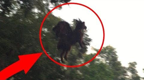 Top 10 Scary Creatures Caught On Camera Big Foot Sightings In Real Life