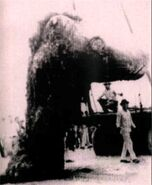 Tecolutla Monster