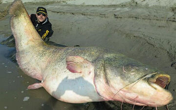 Catfish 2 3211532b
