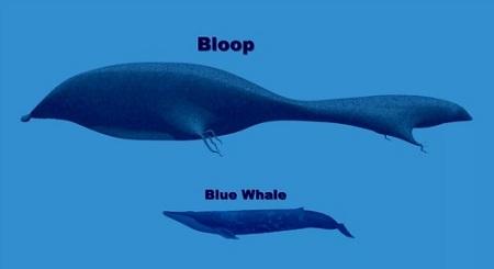 The Bloop