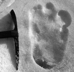Yeti-footprint