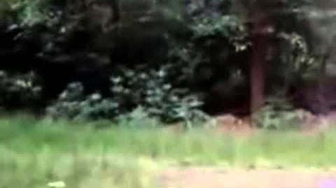 BBR - Yellowham Hill Bigfoot howls