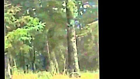 BBR - Blessington footage - Enhanced, stabilized & slowed