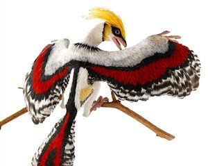 Gitmo bird
