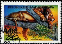 Malagasy1187Pantheraleo32195
