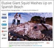 Spainsquid