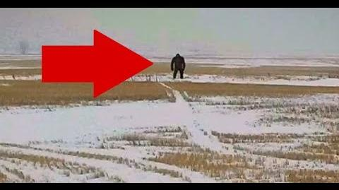 """5 Most AMAZING Never Before Seen """"REAL BIGFOOT"""" Videos!!"""
