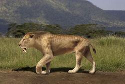 Smilodon populator Rom-diz