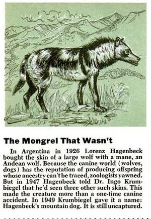 Andeanwolf