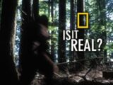 Is It Real? (TV series)
