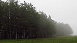 Misty Zlatibor forest