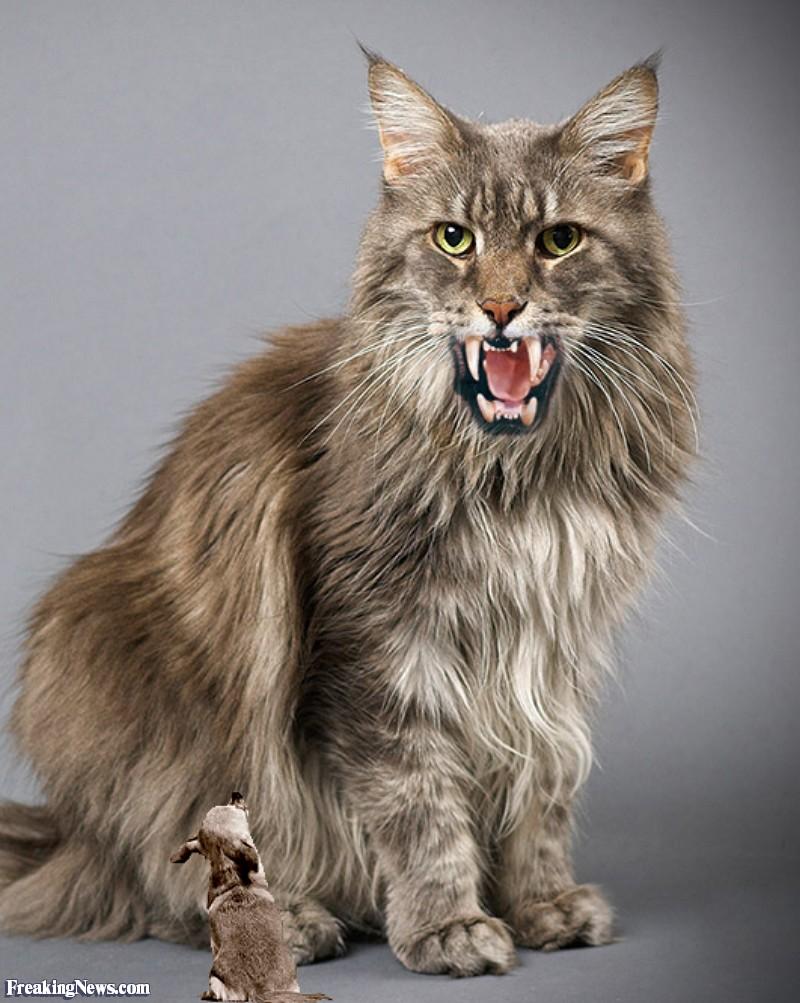 Nayarit Ruffed Cat Cryptid Wiki Fandom Powered By Wikia