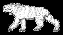 Ennedi tiger Carnby
