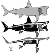 21.Basking shark-plesiosaur